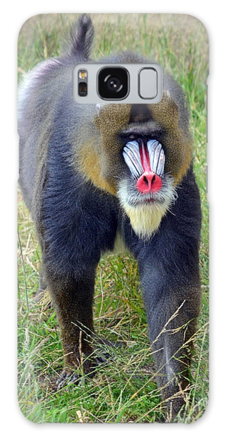 Mandrill Galaxy S8 Case featuring the photograph The World's Largest Species Of Monkey The Mandrill by Jim Fitzpatrick