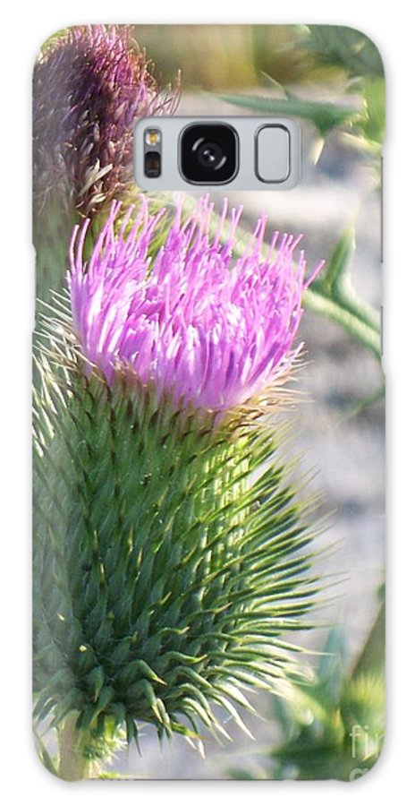 Thistle Galaxy S8 Case featuring the painting Thistle Flower by Eric Schiabor