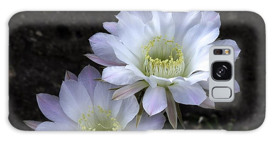 Flowers Galaxy S8 Case featuring the photograph Thorny Beauty by John Kulberg