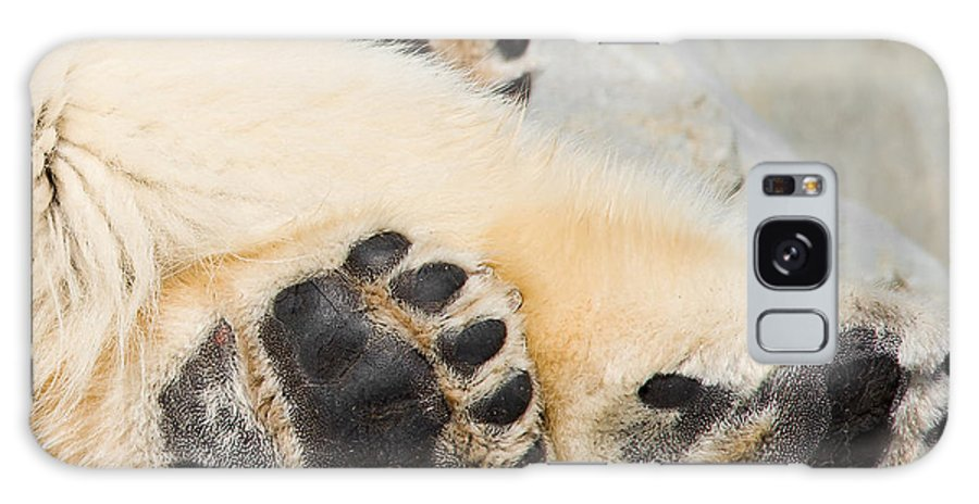 Bear Galaxy S8 Case featuring the photograph Three Bear Paws by Les Palenik