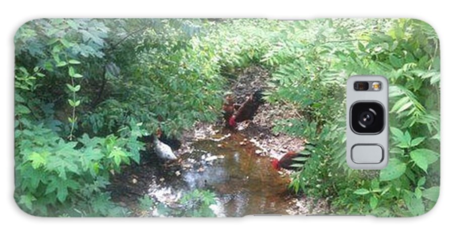 Chicks Drinking From Stream At Home With Owners Galaxy S8 Case featuring the painting Photograph By Steve /carol by Mary h spencer hollis Driskell