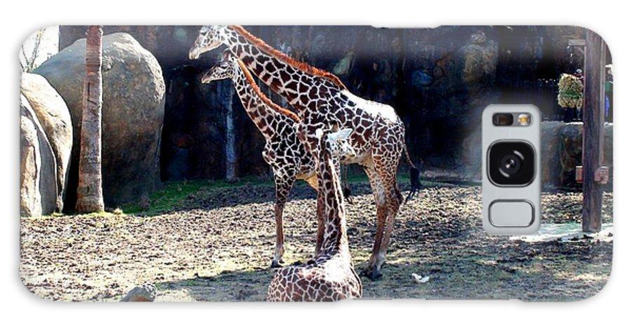 Giraffe Galaxy S8 Case featuring the photograph Three Giraffes by Matt Johnson