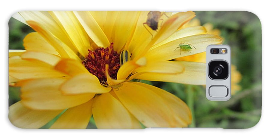 Flowers Galaxy S8 Case featuring the photograph Three Insects And A Flower by Tina M Wenger