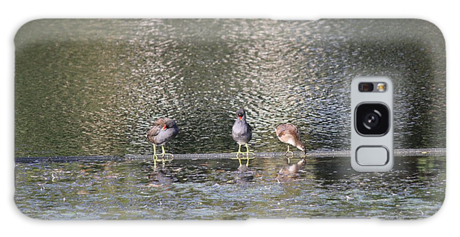 Birds Galaxy S8 Case featuring the photograph Three Of Us by Four Hands Art
