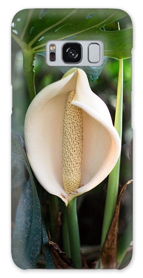 White Galaxy S8 Case featuring the photograph three white Calla lilies isolated on a black background by Frank Gaertner