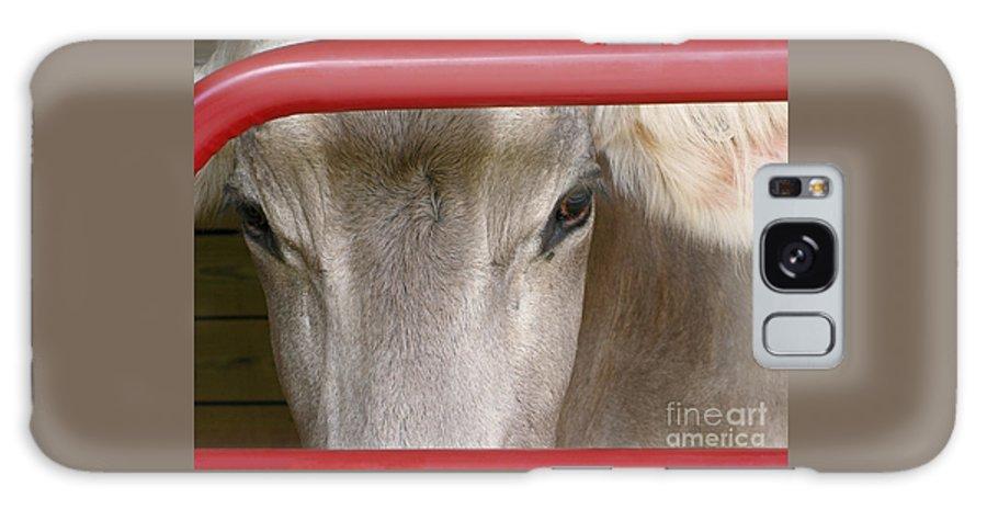 Cow Galaxy S8 Case featuring the photograph Through The Gate by Ann Horn