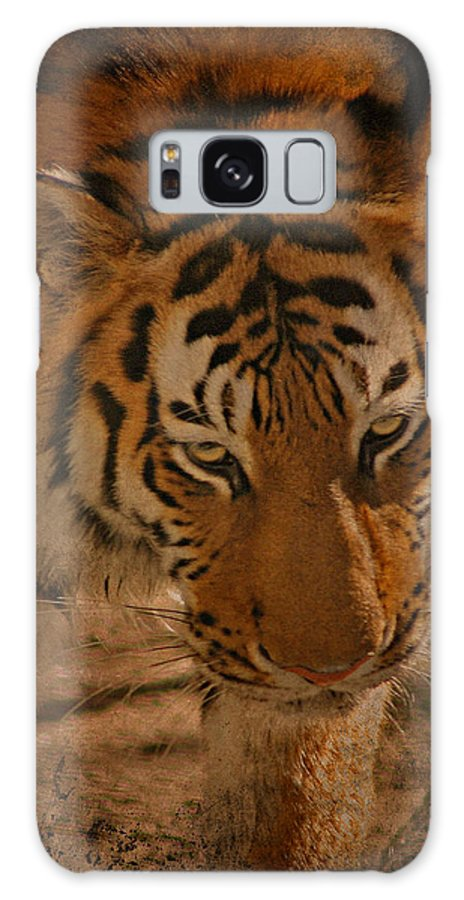 Tiger Galaxy S8 Case featuring the photograph Tiger Art by Cindy Haggerty