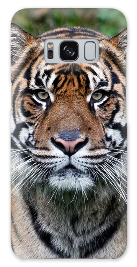 Tiger Galaxy S8 Case featuring the photograph Tiger Stripes by Athena Mckinzie