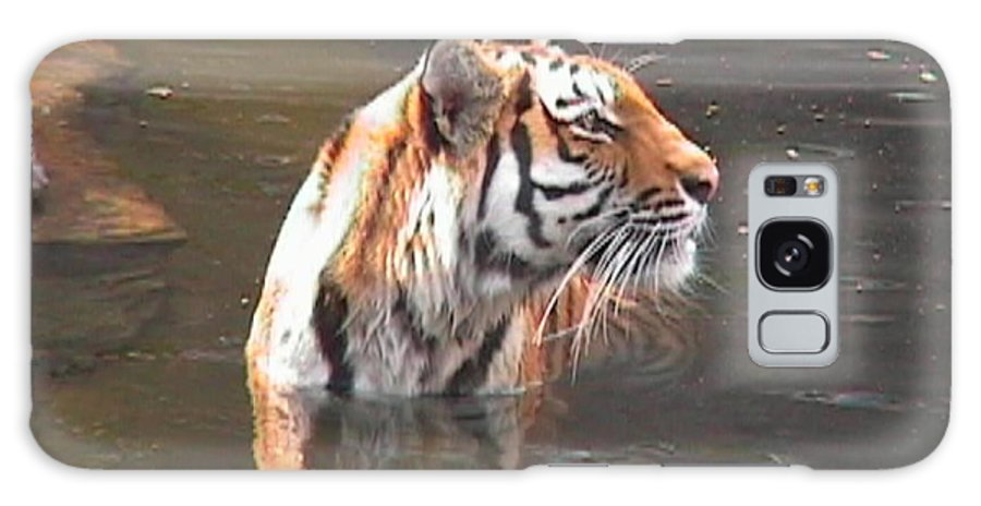 Tiger Galaxy S8 Case featuring the photograph Tiger Getting Wet by Daniel Henning