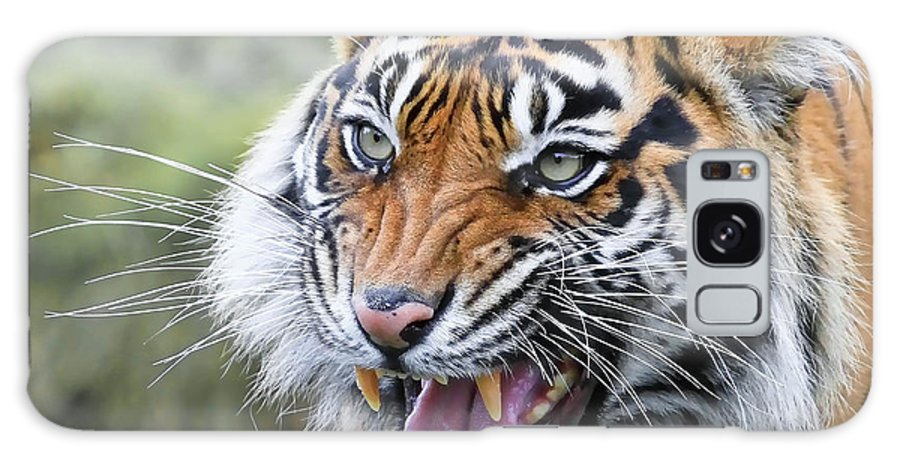 Tiger Galaxy S8 Case featuring the photograph Tiger Growl by Athena Mckinzie