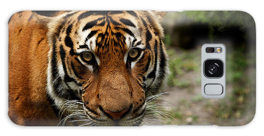 Wildlife Galaxy S8 Case featuring the photograph Tiger by Michael Key