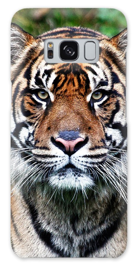 Tiger Galaxy S8 Case featuring the photograph Tiger Stare by Athena Mckinzie