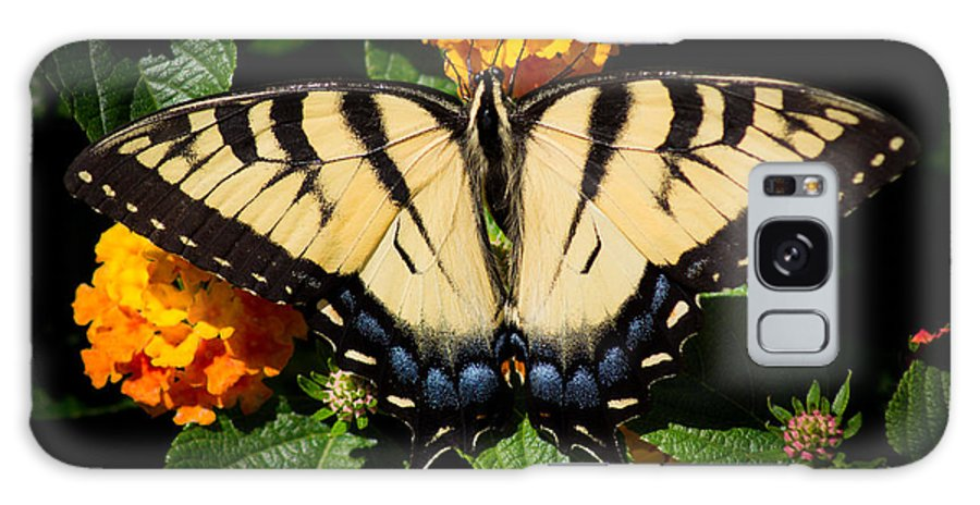 Tiger Swallowtail Galaxy S8 Case featuring the photograph Tiger Swallowtail by Jason Picard