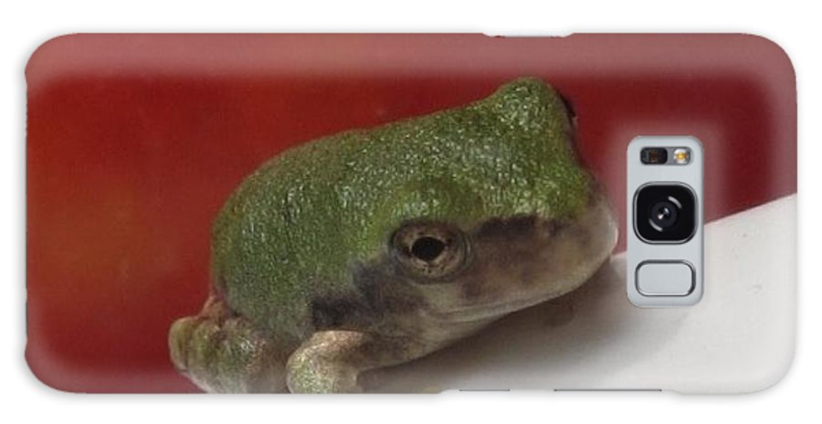 Little Galaxy S8 Case featuring the photograph Tiny Frog by Christine Bradley