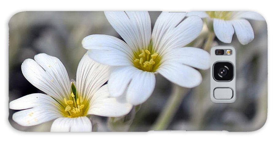 Flower Galaxy S8 Case featuring the photograph Tiny White Flowers #1 by Beth Sawickie