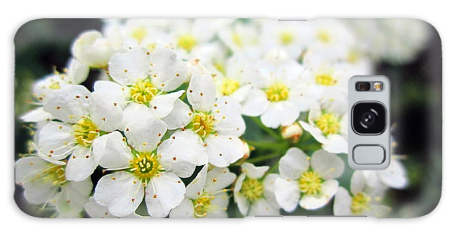 White Galaxy S8 Case featuring the photograph Tiny White Yellow Flowers by Cynthia Clark