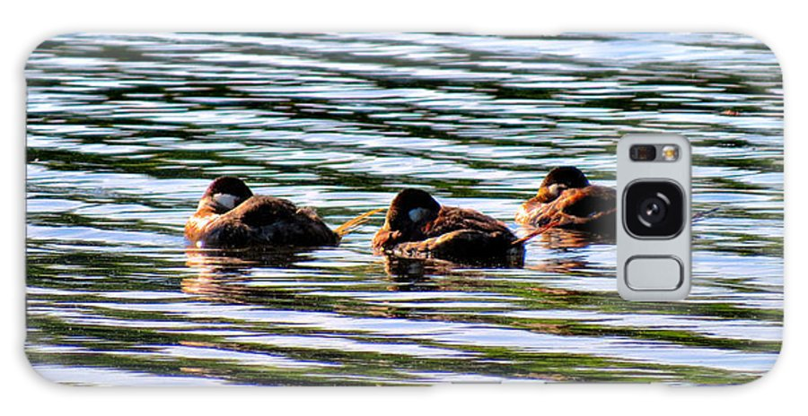 Ducks Galaxy S8 Case featuring the photograph Tired Trio by Art Dingo