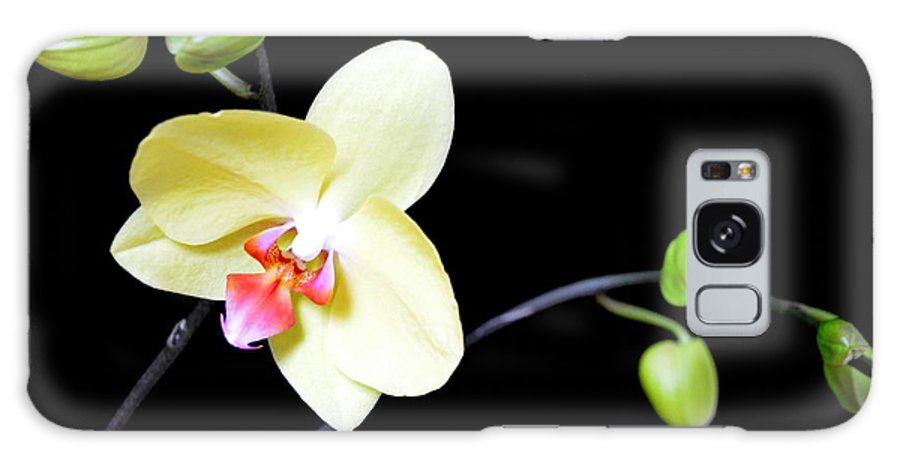 Orchid Galaxy S8 Case featuring the photograph Tomorrow's Promises - No 1 by Mary Deal