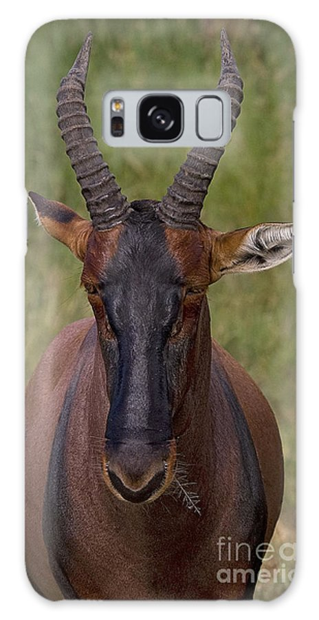 Damaliscus Lunatus Galaxy S8 Case featuring the photograph Topi  #0848 by J L Woody Wooden