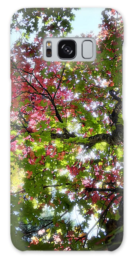 Tree Galaxy S8 Case featuring the photograph Touches Of Autumn by Saija Lehtonen