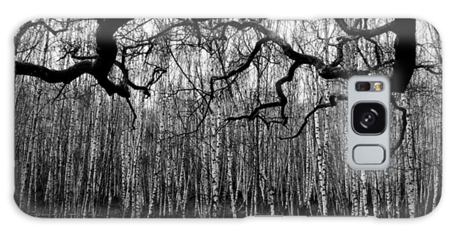 Bare Trees In Winter Galaxy S8 Case featuring the photograph Towards The Silver Birches by Paul Chessell