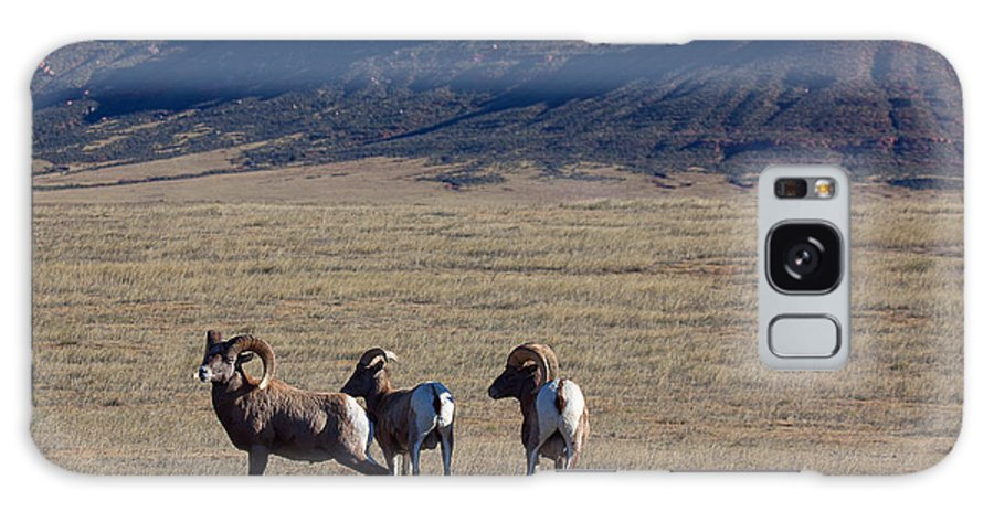 Bighorn Sheep Galaxy S8 Case featuring the photograph Traveling Band by Jim Garrison