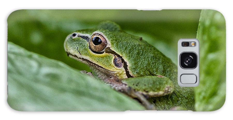 Tree Frog Galaxy S8 Case featuring the photograph Tree Frog by Betty Depee