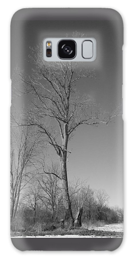 Tree Galaxy Case featuring the photograph Tree In Winter by Michelle Miron-Rebbe