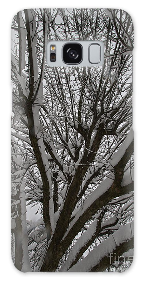 Snow Galaxy S8 Case featuring the photograph Tree Limb 4 by William Norton