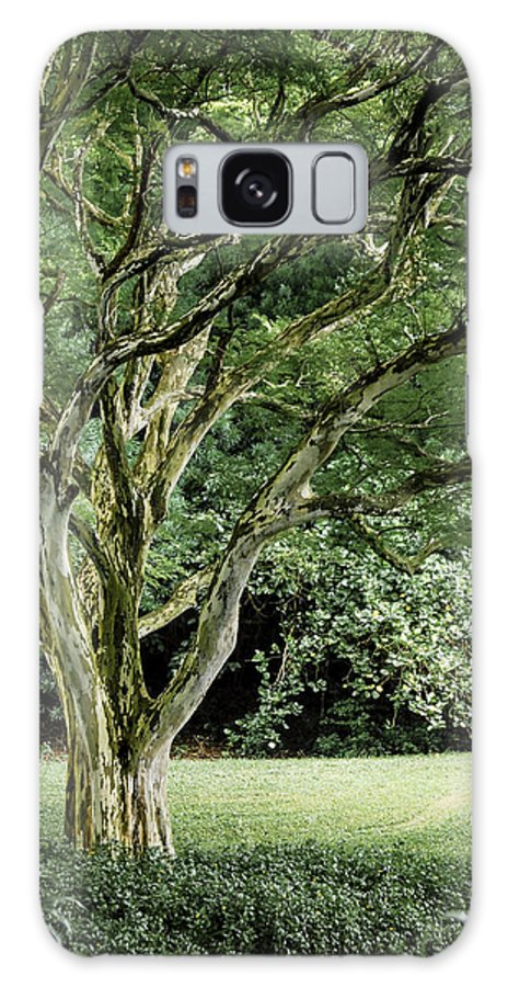 Tree Galaxy S8 Case featuring the photograph Tree Of Life by Debbie Karnes