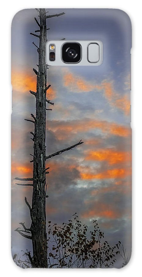 Unset Galaxy S8 Case featuring the photograph Tree Silhouette by Paul Freidlund