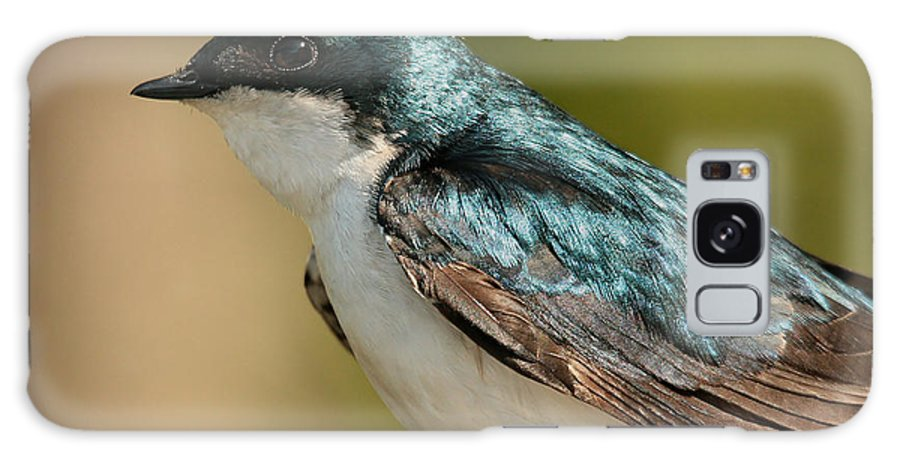 Bird Galaxy S8 Case featuring the photograph Tree Swallow by Roger Becker
