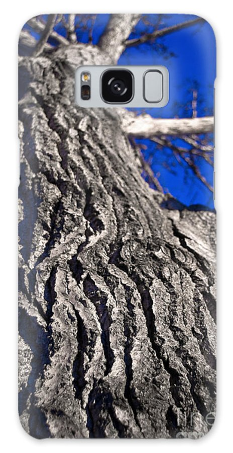 Trees Galaxy S8 Case featuring the photograph Tree Texture by Terry Elniski