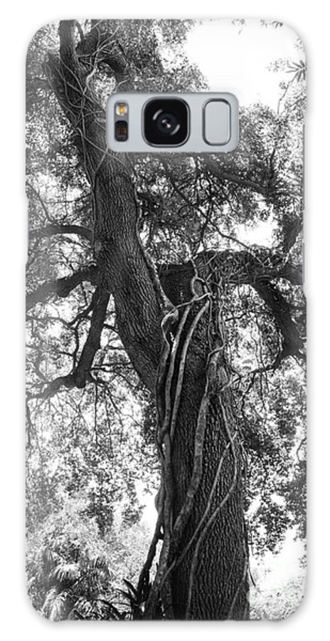Tree Galaxy S8 Case featuring the photograph Tree by Vincent Billotto