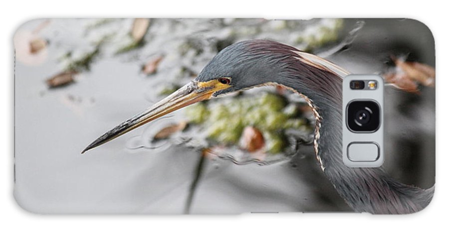 Bird Galaxy S8 Case featuring the photograph Tri Colored Heron Profile by Rosanne Jordan
