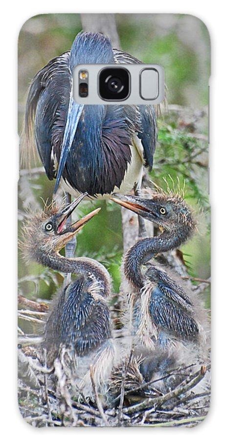 Bird Galaxy S8 Case featuring the photograph Tri-colored Heron With Chicks by Jim Rettker