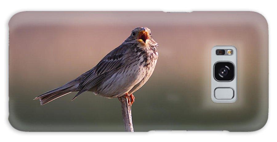 Birds Galaxy S8 Case featuring the photograph Triguero Corn Bunting by Guido Montanes Castillo