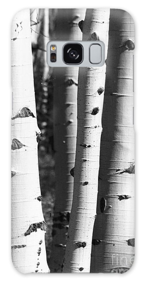 Aspens Galaxy S8 Case featuring the photograph Triple Aspens by Brandi Maher