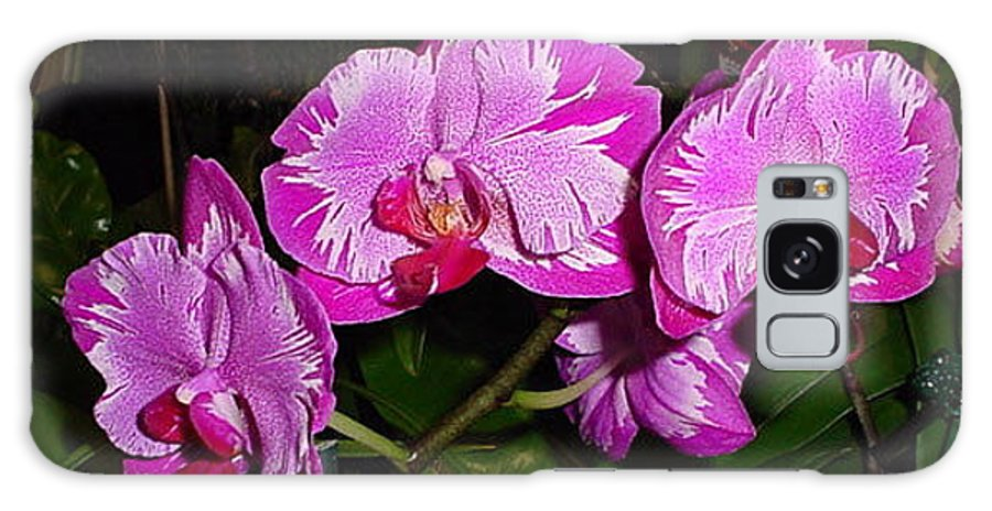 Flowers Galaxy S8 Case featuring the photograph Triple Pink Phalaenopsis by Nancy Chenet