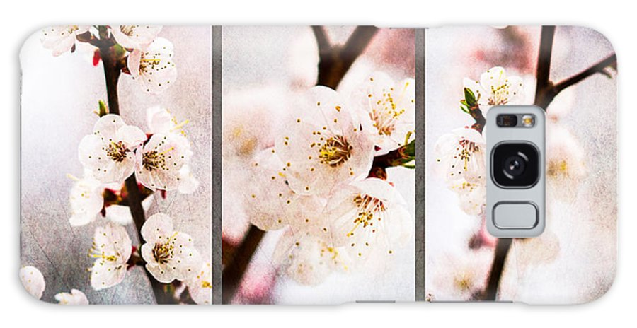 Flower Galaxy S8 Case featuring the photograph Triptych Light Of Spring 1 by Alexander Senin
