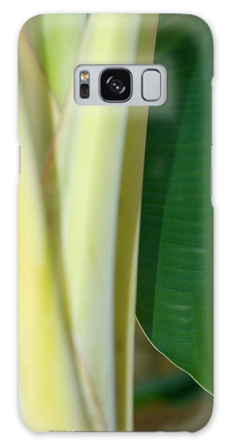 Banana Galaxy S8 Case featuring the photograph Tropical Banana Tree by Connie Fox