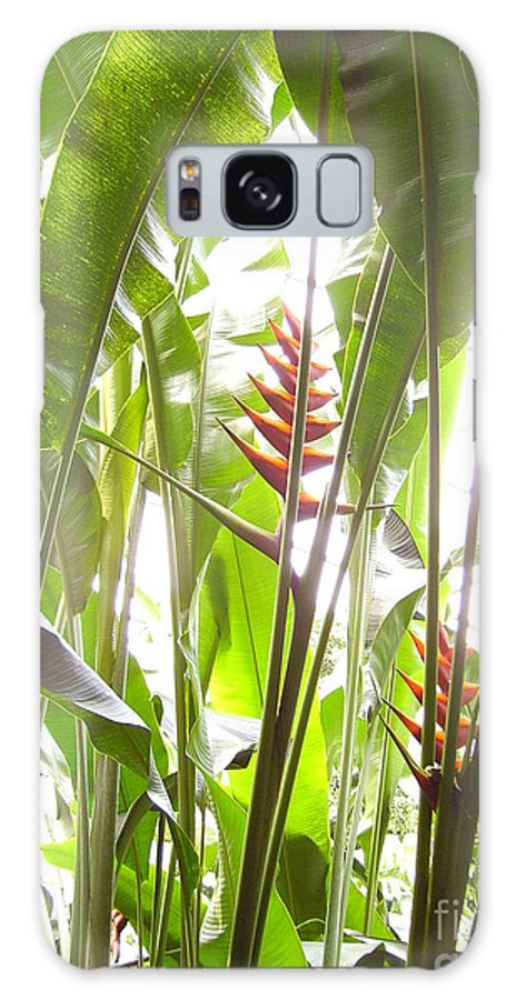 Plants Galaxy Case featuring the photograph Tropical2 by Heather Morris
