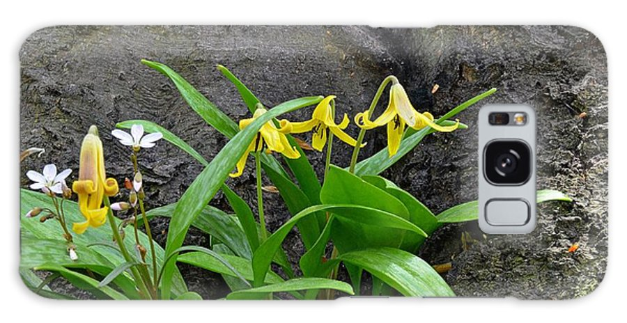 Trout Lily Galaxy S8 Case featuring the photograph Trout Lily In The Woods by Dave Zuker
