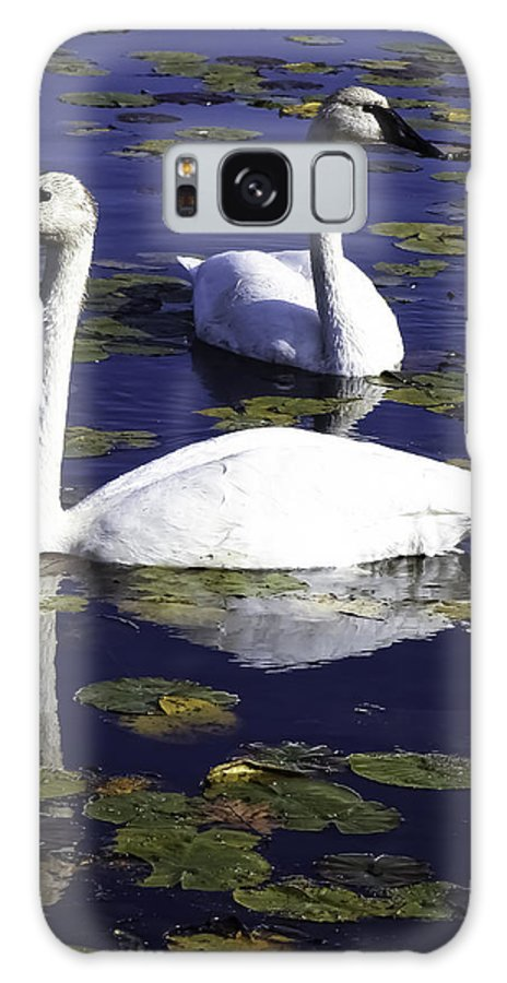 Trumpeter Swan Galaxy S8 Case featuring the photograph Trumpeter Swans In The Blue by Joe Liba