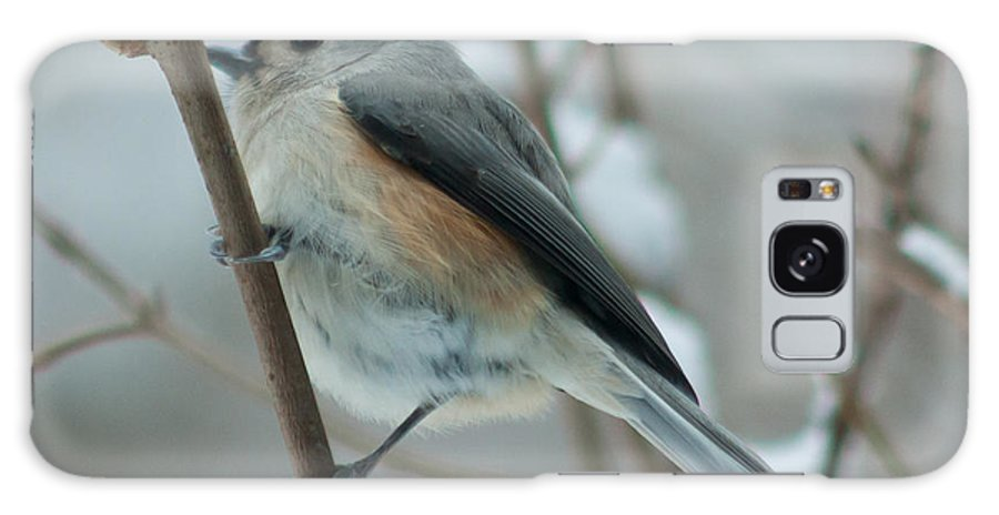 Animal Galaxy S8 Case featuring the photograph Tufted Titmouse Male by Craig Hosterman