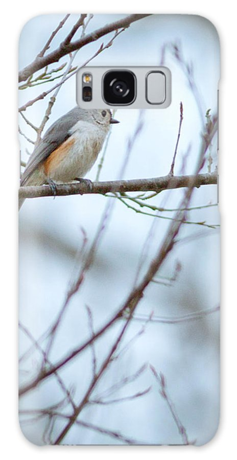 Tufted Titmouse Galaxy S8 Case featuring the photograph Tufted Titmouse by Melinda Fawver
