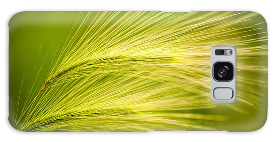 Ornamental Grass Galaxy S8 Case featuring the photograph Tufts Of Ornamental Grass by Onyonet Photo Studios