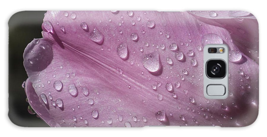 Flowers Galaxy S8 Case featuring the photograph Tulip In The Rain by Lili Feinstein
