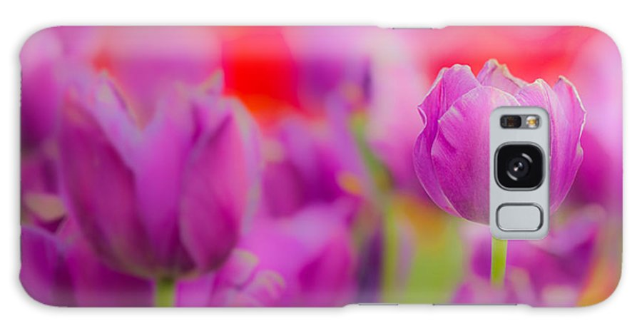 Tulip Galaxy S8 Case featuring the photograph Tulip by Joseph Bowman
