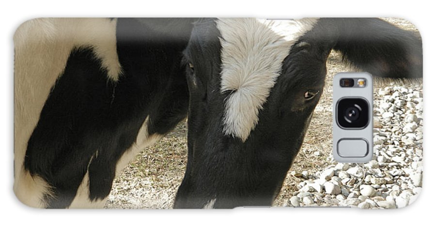 Tulip The Cow Galaxy S8 Case featuring the photograph Tulip The Cow by Emmy Vickers